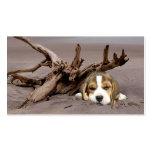 Tarjeta de visita del criador del beagle