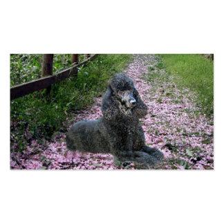 Tarjeta de visita del criador del caniche