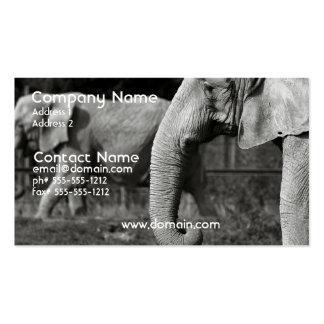 Tarjeta de visita del elefante asiático