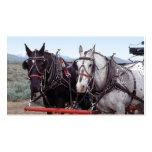Tarjeta de visita del equipo del caballo