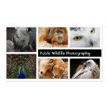 Tarjeta de visita del fotógrafo de la fotografía d