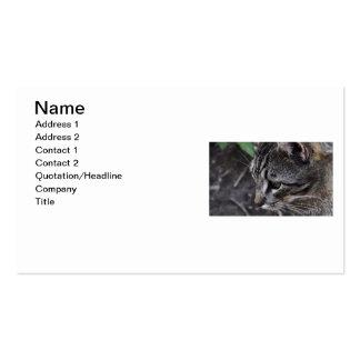 Tarjeta de visita del gato de Tabby