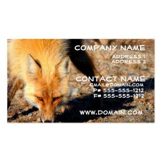 Tarjeta de visita del hábitat del Fox rojo