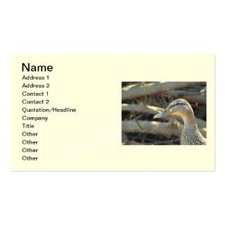 Tarjeta de visita del pato del pato silvestre