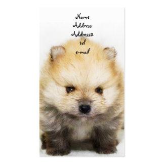Tarjeta de visita del perrito de Pomeranian