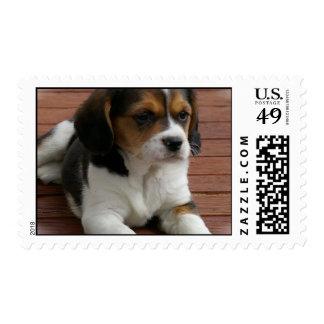 Tarjeta de visita del perro de perrito del beagle sellos postales