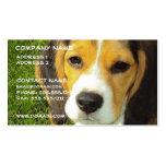 Tarjeta de visita del perro del beagle