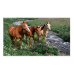Tarjeta de visita del trío del caballo