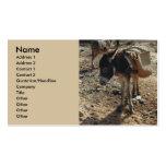 Tarjeta de visita marroquí de la mula