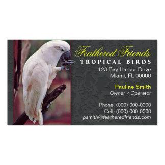 Tarjeta de visita tropical de los pájaros