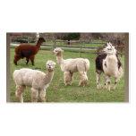 Tarjeta de visitas del ~ de la mezcla de la alpaca tarjeta personal