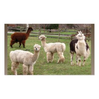 Tarjeta de visitas del ~ de la mezcla de la alpaca tarjetas de visita