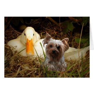 Tarjeta de Yorkshire Terrier con el pato