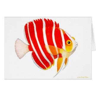Tarjeta del Angelfish de la hierbabuena del acuari