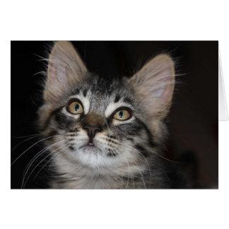 Tarjeta del aniversario de la inocencia del gatito