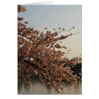 Tarjeta del árbol de la flor de cerezo