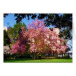 Tarjeta del árbol de la magnolia