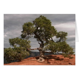 Tarjeta del árbol del vórtice de Sedona