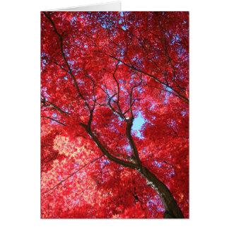 Tarjeta del arce rojo