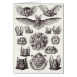 Tarjeta del arte de Ernst Haeckel: Chiroptera
