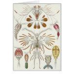 Tarjeta del arte de Ernst Haeckel: Copepoda