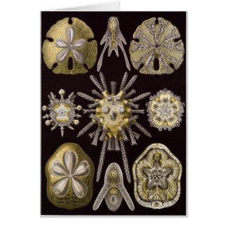 Tarjeta del arte de Ernst Haeckel: Echinidea