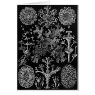 Tarjeta del arte de Ernst Haeckel: Lichenes