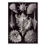 Tarjeta del arte de Ernst Haeckel: Prosobranchia
