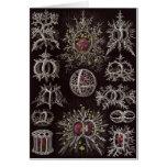 Tarjeta del arte de Ernst Haeckel: Stephoidea