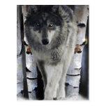 Tarjeta del arte del lobo gris y de la fauna del postal