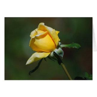 Tarjeta del brote del rosa amarillo