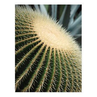 Tarjeta del cactus