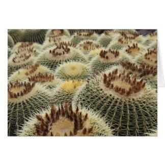 Tarjeta del cactus de barril