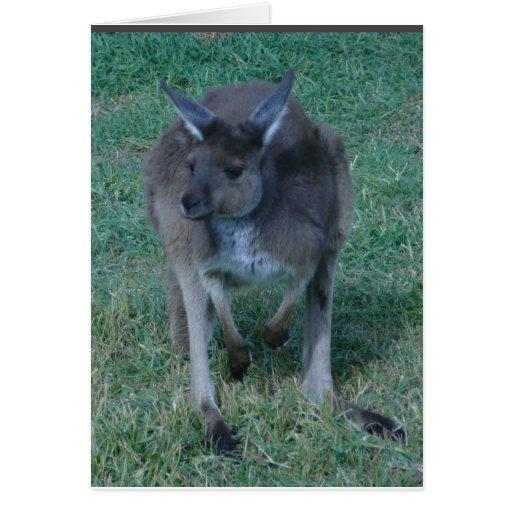 Tarjeta del canguro de Skippy