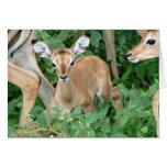 Tarjeta del cervatillo del impala