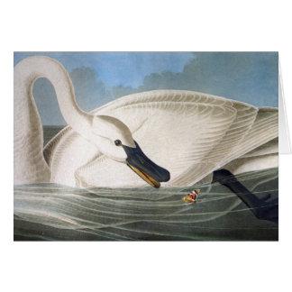 Tarjeta del cisne de Audubon