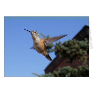 Tarjeta del colibrí