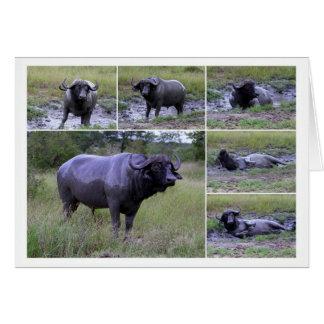 Tarjeta del collage del baño de fango del búfalo
