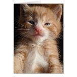Tarjeta del Cuteness del gatito