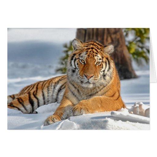 Tarjeta del día de fiesta del tigre