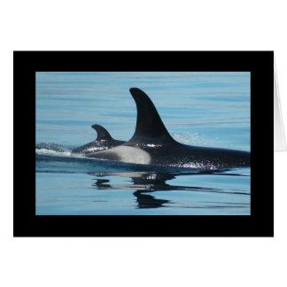 Tarjeta del día de madre de la orca/de la orca
