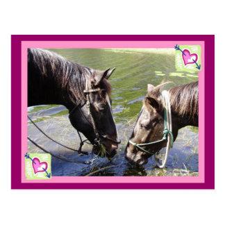 Tarjeta del día de San Valentín de caballo Tarjetas Postales