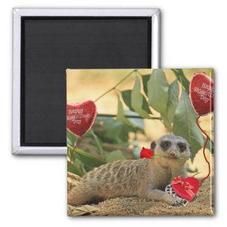 Tarjeta del día de San Valentín Meerkat Imán Cuadrado