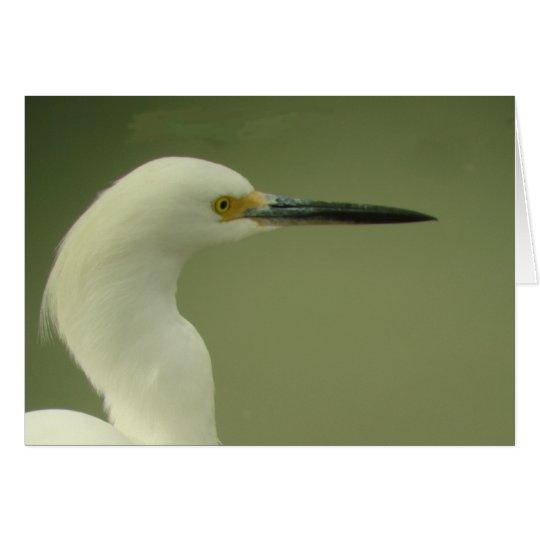 Tarjeta del Egret nevado