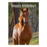 Tarjeta del feliz cumpleaños del caballo para los