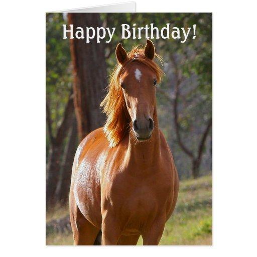 Tarjeta del feliz cumpleaños del caballo para los | Zazzle