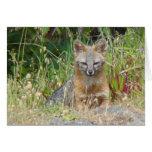 Tarjeta del Fox gris
