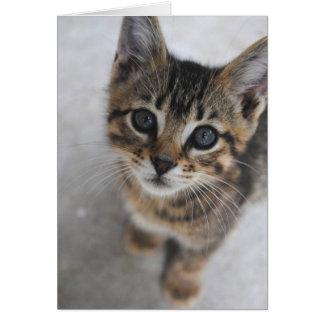 Tarjeta del gatito