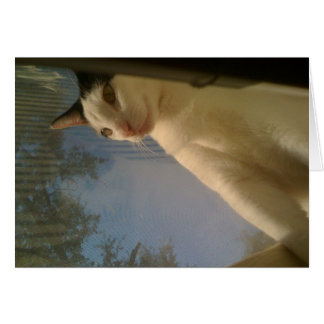 Tarjeta del gatito de la ventana