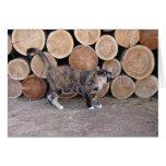 Tarjeta del gato y del woodpile